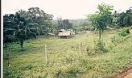 Algodão - sitío do tio valdo 1999.  por Gésio