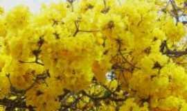 Ocidente - Flor do ipê amarelo (flora), Por Elpídio Justino de Andrade
