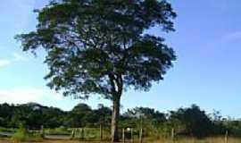 Padre Carvalho - Estrada Josenópolis em Padre Carvalho-Foto:hamiltondutra