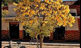 Passa Quatro - Gon�alves-MG-Ip� amarelo no centro da cidade-Foto:AntonioVidalphotography