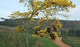 Paula Cândido - Paula Cândido-MG-Ipê amarelo em estrada rural-Foto:ivan oliveira