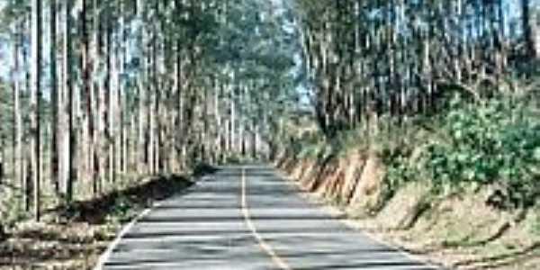 Estrada arborizada-Foto:montanha