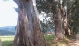 Pedralva - Lindas árvores em Pedralva-Foto:sheila faria