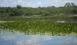 Angical - lagoa do benfica, Por RAIMUNDO SOUZA DA ANUNCIAÇAO