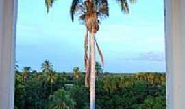 Angical - Palmeira Imperial vista da torre da Igreja Sra. Santana, por Fotos Junin.