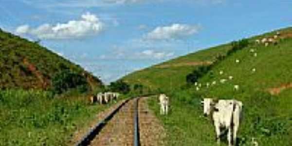 Ferrovia e boiada em Penha Longa-Foto:Jorge A. Ferreira Jr…