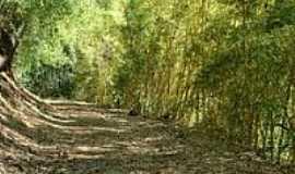 Piedade de Caratinga - Trilha de bambú-Foto:Mohammad alberth