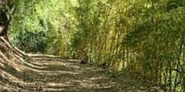 Trilha de bambú-Foto:Mohammad alberth