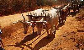 Poções de Paineiras - Carro de boi na estrada em Poções-Foto:Wilson Fortunato