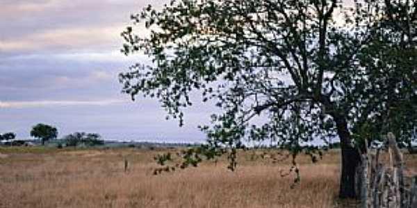 Araci-BA-�rea rural-Foto:DaniloVictor