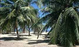 Barra de S�o Miguel - Coqueiros na Praia do Gunga-Foto:rafiuskss