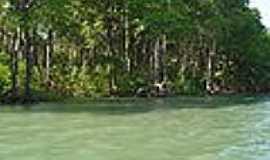 Barra de S�o Miguel - Mangue-Foto:Wikip�dia