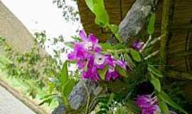 Rosário da Limeira - Flora da região por sgtrangel