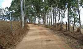 Santa Cruz da Aparecida - Estrada com eucalíptos-Foto:profGilson