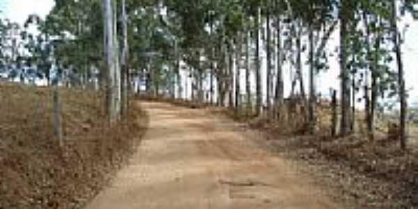 Estrada com eucalíptos-Foto:profGilson