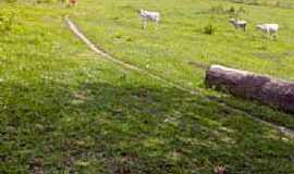 Santa Helena de Minas - córrego do norte por wendel02