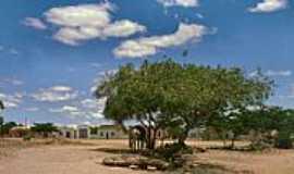 Argoim - Árvore de Pau Brasil em Argoim-BA-Foto:HaraldP