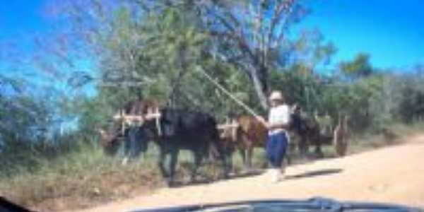 Carro de Boi em Santana, Por Renato Augusto Velho