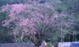Santo Ant�nio do Itamb� -  palmeira, centro da city, Por dayane kelly
