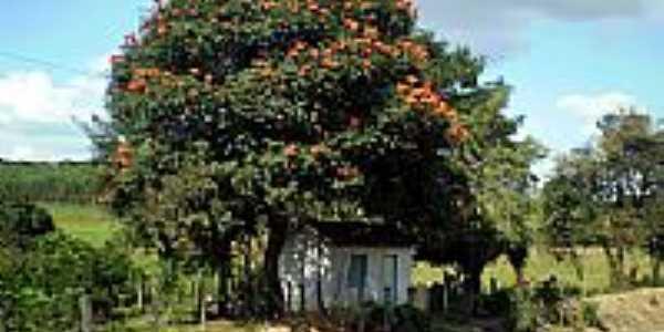 Casa na beira da estrada de ferro em Santo Antonio dos Campos-Foto:paulosalatiel
