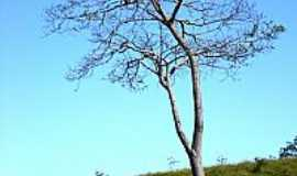 Santo Hipólito - Santo Hipólito-MG-Árvore Barriguda-Foto:Leandro Durães
