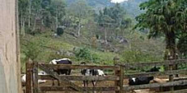 Curral da Fazenda Boa Esperança-Foto:FTADEU