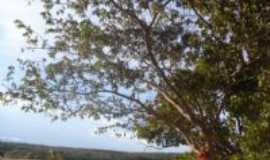 São José do Buriti - Por maria helena custodio de oliveira