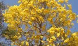 São José dos Salgados - Ipê Amarelo - símbolo nacional., Por AROMA Cyber Café