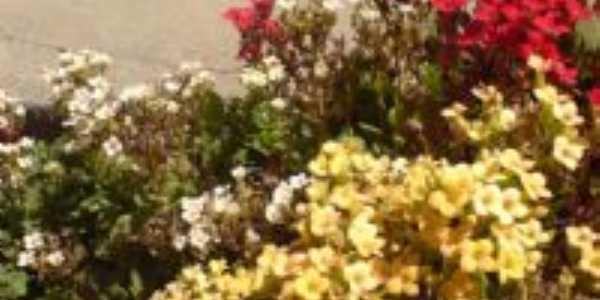 Jardins floridos., Por AROMA Cyber Café