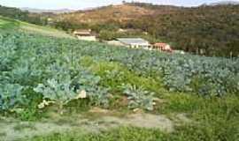 Sarzedo - Área rural-Foto: R & M