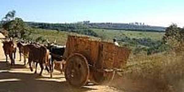 Carro de Boi na Serra do Camapuã-MG-Foto:Ulisses Passarelli