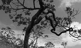 Serra do Salitre - Serra do Salitre-MG-Árvores do Cerrado-Foto:guardiaodocerrado
