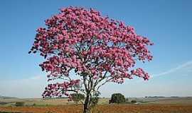 Serra do Salitre - Serra do Salitre-MG-Ipê roxo no campo-Foto:guardiaodocerrado