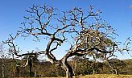 Sete Lagoas - Sete Lagoas-MG-Árvore de Imbiruçu seca no meio do pasto-Foto:Renan Louzada