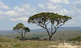 Tapira - Árvores do cerrado, por Altemiro O. Cristo