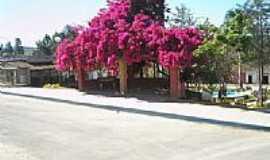 Tapiraí - Primavera-Foto:tiago firmino boaven…