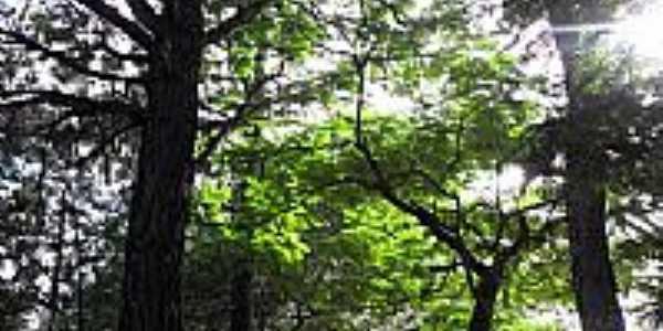 Uberlândia-MG-Caminho entre árvores no Parque do Sabiá-Foto:Letíciaao