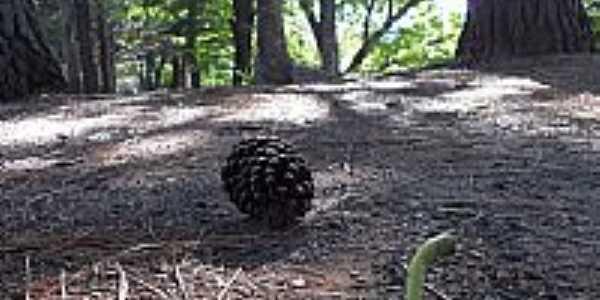 Uberlândia-MG-Pinha caída no Parque do Sabiá-Foto:Letíciaao