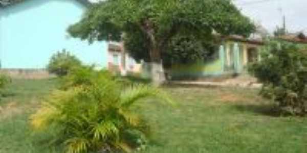 Foto do pé de cuité atrás da igrejinha de São Vicente, Por Dimas