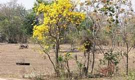 Água Clara - Água Clara-MS-Paisagem junto à Rodovia BR-262-Foto:carlos henrique da silva