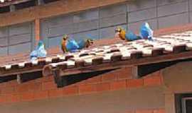Albuquerque - Aves no telhado em Albuquerque-MS-Foto:Veronez
