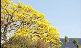 Albuquerque - Ipê Amarelo na Baia de Albuquerque-MS-Foto:Nerone Maiolino