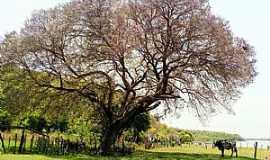 Amolar - Amolar-MS-Fazenda em Amolar-Foto:Ecoa