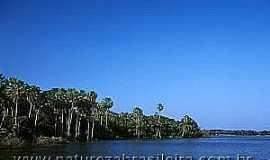 Amolar - Amolar-MS-Lagoa Guaíba-Foto:www.naturezabrasileira.