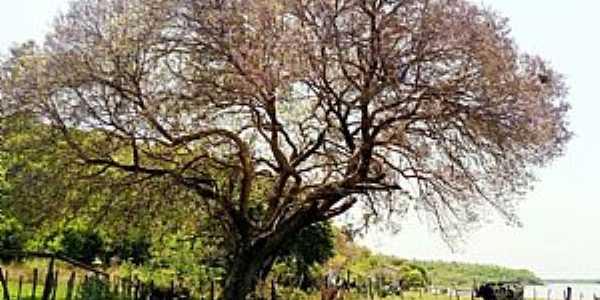 Amolar-MS-Fazenda em Amolar-Foto:Ecoa