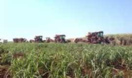 Angélica - colheita  de cana, Por SERGIO TARDIOLLI