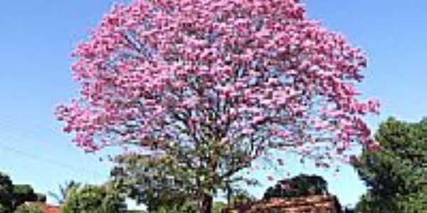 Ipê rosa na Av.Cuiabá-Foto:marcioromanini