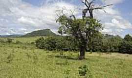 Cipolândia - Vegetação de Cipolândia-MS-Foto:www.pedal.com.br