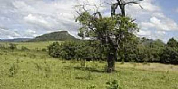 Vegetação de Cipolândia-MS-Foto:www.pedal.com.br