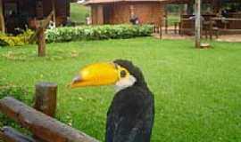 Costa Rica - Tucano - Parque Municipal de Costa Rica-Foto:Juvenal Coelho Ribei…